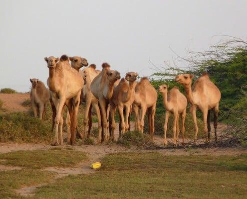 Somaliland-marathon