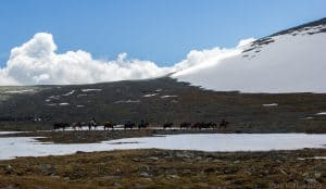 Crossing Plateau on Horses, Altai Republic