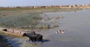 iraq-marshes