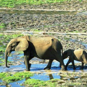 Dzanda Sangha National Park
